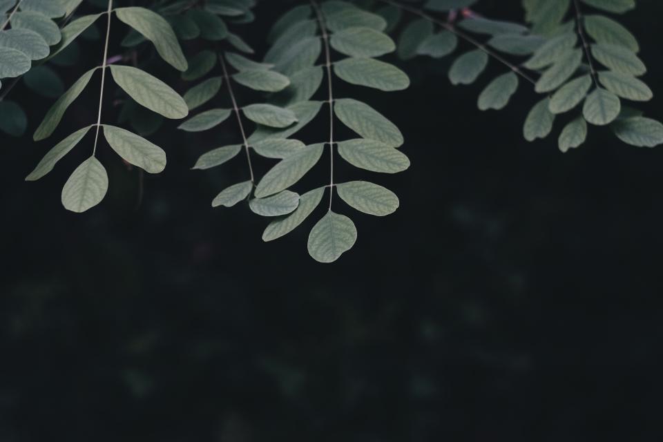 header-background