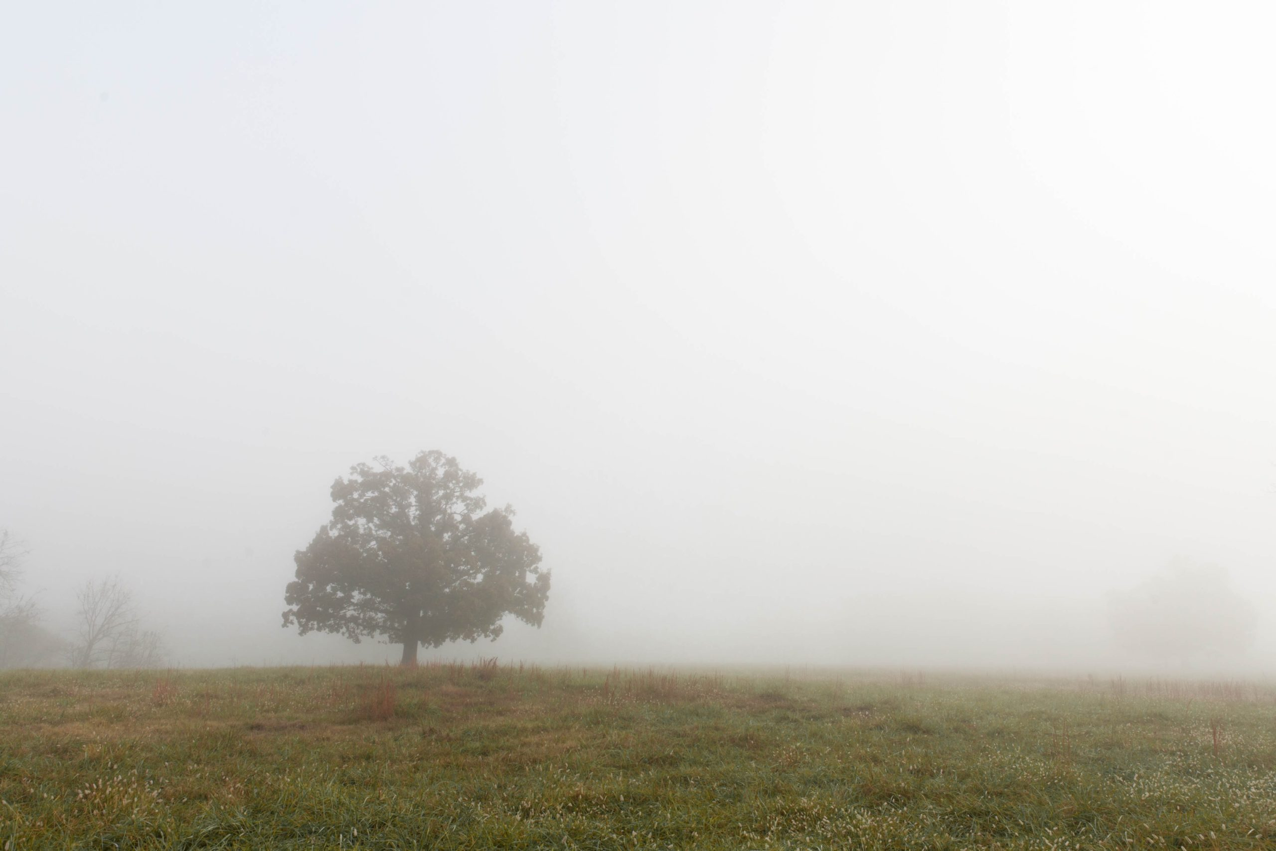 tree in foggy field